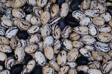 cannellino black bean of sarconi pgi black beans pgi certification belisario farm basilicata lucanian