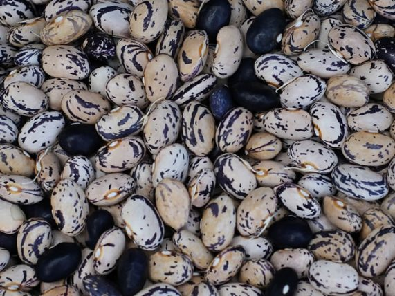 cannellino black bean of sarconi pgi black beans pgi certification belisario farm basilicata lucanian