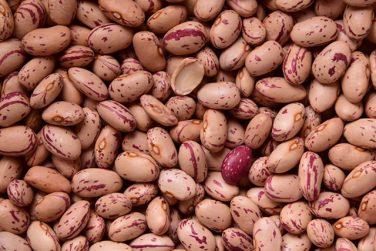 regina or ciuoto bean of sarconi pgi pgi certification belisario farm basilicata lucanian