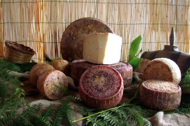 filiano pecorino cheese pdo sheep cheese cheese sheep milk caggiano farm pdo certification basilicata lucanian