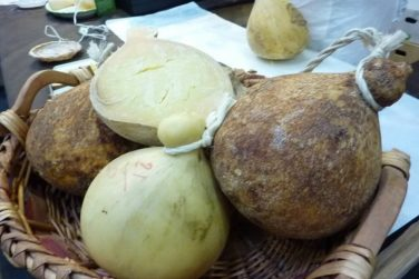 caciocavallo podolico slow food caciocavallo podolico cheese cow milk certificate slow food pessolani farm basilicata lucania